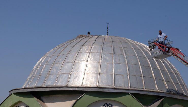 Yavru Leylek, Düştüğü Cami Kubbesindeki Yuvasına Bırakıldı